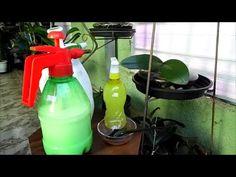 Combate aos Fungos e Ácaros usando Leite de Vaca ou Leite de Magnésia. - YouTube