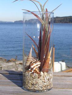 Seagrass/shell arrangements (add sand dollars)