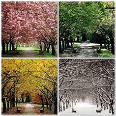 Wow The Four Seasons. (I want to take pictures of a tree in my yard each season when I buy a house) Different Seasons, Seasons Of The Year, Four Seasons, Giuseppe Arcimboldo, Fotos Wallpaper, Literary Themes, Nothing Gold Can Stay, Enchanted Home, Art Plastique