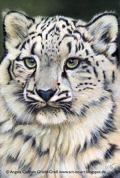 "my newest wildlife pastel painting: Snow Leopard ""Ena"" 8x12 inches on pastelcard Angela-Carmen Griehl-Groß www.art-ist-art.blogspot.de"