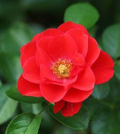 Must-Have Gorgeous Garden Plants - heatherincanyon@gmail.com - Gmail