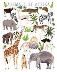 african animals for kids - Google Search Crocodile Illustration, Giraffe Illustration, Wild Animals Drawing, Watercolor Animals, Animal Art Prints, Animal Posters, Giant Animals, Safari Animals, Animal Sketches