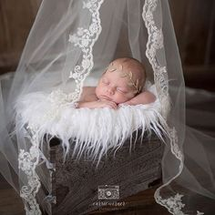 Veil above crib for a canopy (and another use for the veil) - Baby fotoshooting - Baby Foto Newborn, Newborn Baby Photos, Baby Poses, Baby Girl Photos, Newborn Poses, Newborn Shoot, Newborn Pictures, Baby Girl Newborn, Baby Pictures