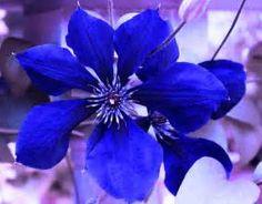 Indigo Flower by Milena Ilieva