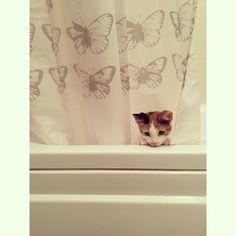 #kitten #bathtime #bath #showercurtain #love #pet #butterfly #cute #goodmorning #happy