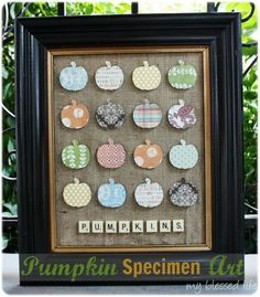 DIY Pumpkin Specimen Art DIY Fall Decor DIY Home Decor