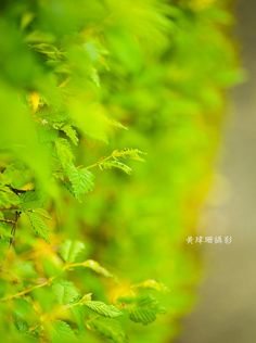 Leaves 11 by Wei-San Ooi  on 500px