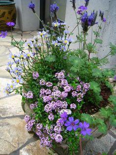 ガーデニング初心者にもできる!?植物の寄せ植えを楽しむ方法の画像