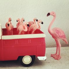 Flamingo and little friends