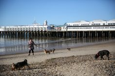 A woman walks her dogs past the pier in Clacton-on-Sea, a town in eastern England, where 70 percent of people voted on June 23, 2016 to leave the European Union, Britain August 23, 2016. REUTERS/Neil Hall       SEARCH 'CLACTON BREXIT' FOR THIS STORY. SEARCH 'WIDER IMAGE' FOR ALL STORIES.  via @AOL_Lifestyle Read more: https://www.aol.com/article/news/2017/07/10/sweden-ranked-best-country-to-be-an-immigrant/23023633/?a_dgi=aolshare_pinterest#fullscreen