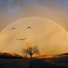 These #bird s make it look like the #rainbow is #happy #PerfectTiming #Perfect_Timing