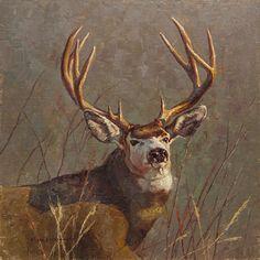 Mark McKenna - Worthy Contender- Oil - Painting entry - May 2016 Deer Art, Moose Art, Painting Competition, Mule Deer, Online Painting, Wildlife Art, Big Game, Giraffe, Art Ideas