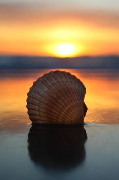 Shell by Courtney D on 500px