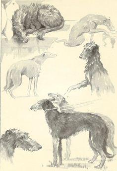 Vintage 1935 Black And White Dog Print  Deerhound Character By B Branfoot Dog Study Monochrome Deerhound Personality  Book Plate
