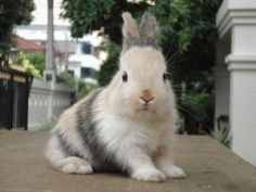 Mona Lisa Bunny Has a Hint of a Smile - August 27, 2011