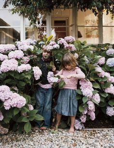 Mad About-Garden-Design- Pink Hydrangea