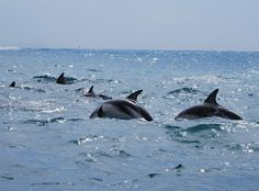 Dolphins in the early morning at Dolphin Cove Inn