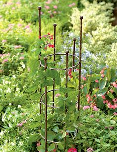 These freestanding Jardin Round Trellises add a sculptural element to your garden landscape and are perfect for flowering vines like clematis and morning glories, as well as climbing roses. Clematis Trellis, Diy Trellis, Garden Trellis, Plant Trellis, Tomato Trellis, Herbs Garden, Fruit Garden, Plant Supports, Flowering Vines