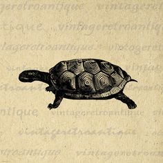 Digital Printable Tortoise Turtle Graphic Download Illustrated Image Vintage Clip Art. Vintage printable graphic for fabric transfers, making prints, tote bags, pillows, tea towels, and more great uses. Real antique clip art. Antique artwork. This image is high quality, high resolution at 8½ x 11 inches. A Transparent background png version is included.