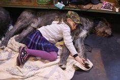 Wer denkt, große Hunde seien grundsätzlich kein geeigneter Umgang für Kinder,...
