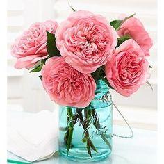 English Country Garden Roses