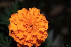 عکس ببین   عکس از طبیعت #گل    #عکس_گل    #گل_نارنجی