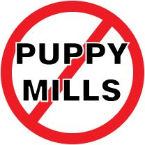 I was thrilled to read that pretty soon pet stores in Los Angeles will stop selling puppies, kittens, and rabbits.  The L.A. City Council passed an ordinance in November banning the retail sale of dogs, cats and rabbits.  This makes Los Angeles the largest city in the U.S. to enact legislation to put an end to the flow of animals from pet mills, the large commercial breeding farms that supply pet stores.  In New York, however, the Pet Industry Joint Advisory Council put a band-aid on the…