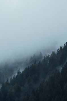 New free photo from Pexels: https://www.pexels.com/photo/fog-around-mountain-with-trees-109037/ #landscape #nature #dark