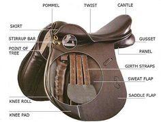 Parts of an English saddle