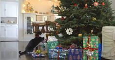 It's the season for giving but do you know what your cat wants for Christmas? Well, our friends at Buzzfeed decided to bring a yuletide treat with an animal twist. In this video, it is an adorable look into the hearts and minds of felines at holiday time. The video starts with the curious cat... View Article