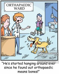 CartoonStock.com: 'He's started hanging around ever since he found out orthopaedic means bones!'