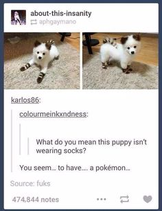A Pokemon!? #pokemon #pokemongo #adorable
