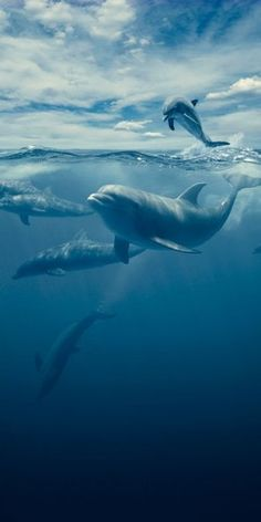 Swimming with dolphins.. Go... See it all! Live your life! Abundance in every area of your life! Get more at http://abundanceleagueinternational.com - Stop the Dolphin and Orca Slaughter NOW
