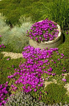 ice plant.....easy,  low lying, and last all summer. Can take heat.  Perennial. Excellent for accent baskets