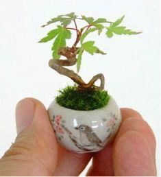 Coisinhas mais fofas: micro-bonsais.
