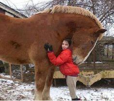 Wowww loving horse http://ift.tt/2lbZoL6