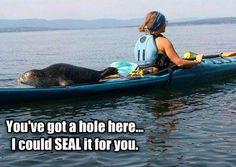 #kayak #seal #wildlife