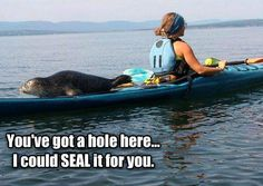 #kayak #seal #wildlife