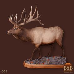 Taxidermy by B&B Taxidermy provides fine taxidermy for Trophy Game Rooms, African, North American and Exotic Mounts located in North Houston Texas The Woodlands Texas, Conroe Texas, Fallow Deer, Trophy Rooms, Animal Games, Wildlife Art, Big Game, Taxidermy, Elk