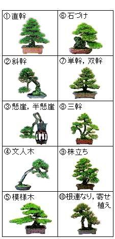 forma de árbol bonsai