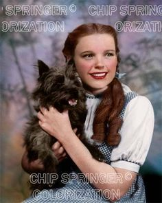 """JUDY GARLAND """"DOROTHY"""" & TOTO (#4) 8X10 BEAUTIFUL COLOR PHOTO BY CHIP SPRINGER. Please visit my Ebay Store at http://stores.ebay.com/x5dr/_i.html?rt=nc&LH_BIN=1 to see the current listings of your favorite Stars now in glorious color! Message me if you would like me to relist your favorites. Check out my New Youtube videos at https://www.youtube.com/channel/UCyX926rA5x4seARq5WC8_0w"""
