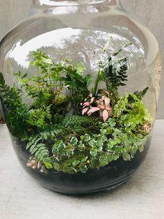 Mini Terrarium, Air Plant Terrarium, Garden Terrarium, Glass Terrarium, Succulents Diy, Planting Succulents, Planting Flowers, Bottle Garden, Glass Garden