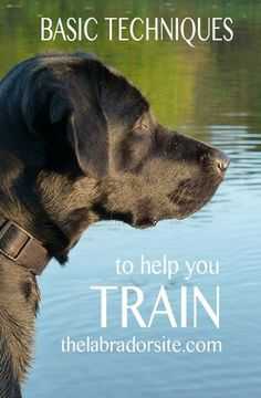 Great tips and ideas for training your dog in this basic dog training techniques article