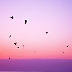 Papers.co wallpapers - np83-sky-bird-pink-red-sunset-nature - http://papers.co/np83-sky-bird-pink-red-sunset-nature/ - animal, sky