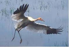 white crane - Google Search