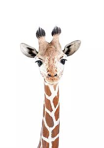 Baby Animal Nursery, Baby Animals, Nursery Art, Llama Pictures, Zebra Painting, Baby Wall Art, Wallpaper Iphone Disney, Animal Cards, Watercolor Animals