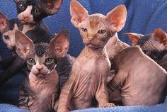 Przysmaki dla kota:  http://www.kakadu.pl/Przysmaki-i-suplementy-dla-kotow/przysmaki-dla-kota.html