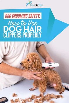 How To Use Dog Clippers to Trim or Cut Dog's Hair: A Video Guide. Learning how to use dog clippers is a skill that every pet owner should know. There are certain breeds that require regular haircuts, and knowing how to do it at home can save you a lot on professional grooming expenses. Even if your dog doesn't need a haircut, you may need to shave a small patch of his fur at some point. #dogs #pets #doghair #grooming #clippers #dogclipper #petgrooming #animals #howto #videos #video #yo...