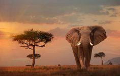 Masai Mara National Park - Buena Vista Images/Getty Images