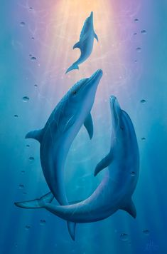 Water Element | Dolphin Dreams a Painting by David Miller